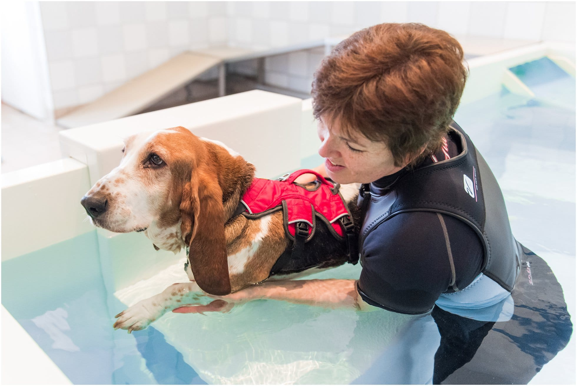bassett hound having hydrotherapy in the pool