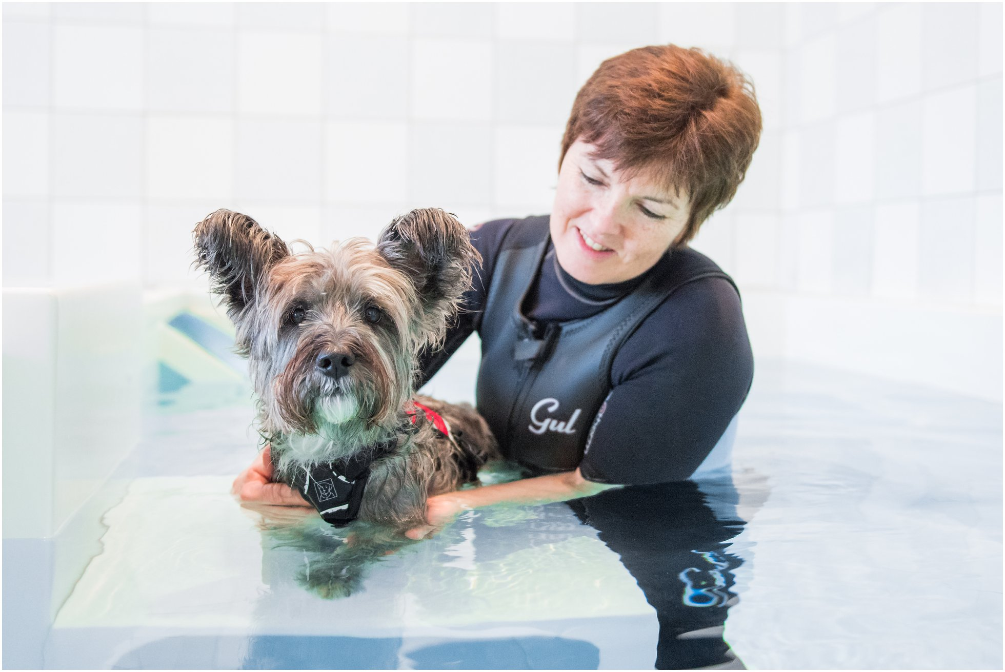 Barbara Houlding dog hydrotherapist with a terrier in the pool