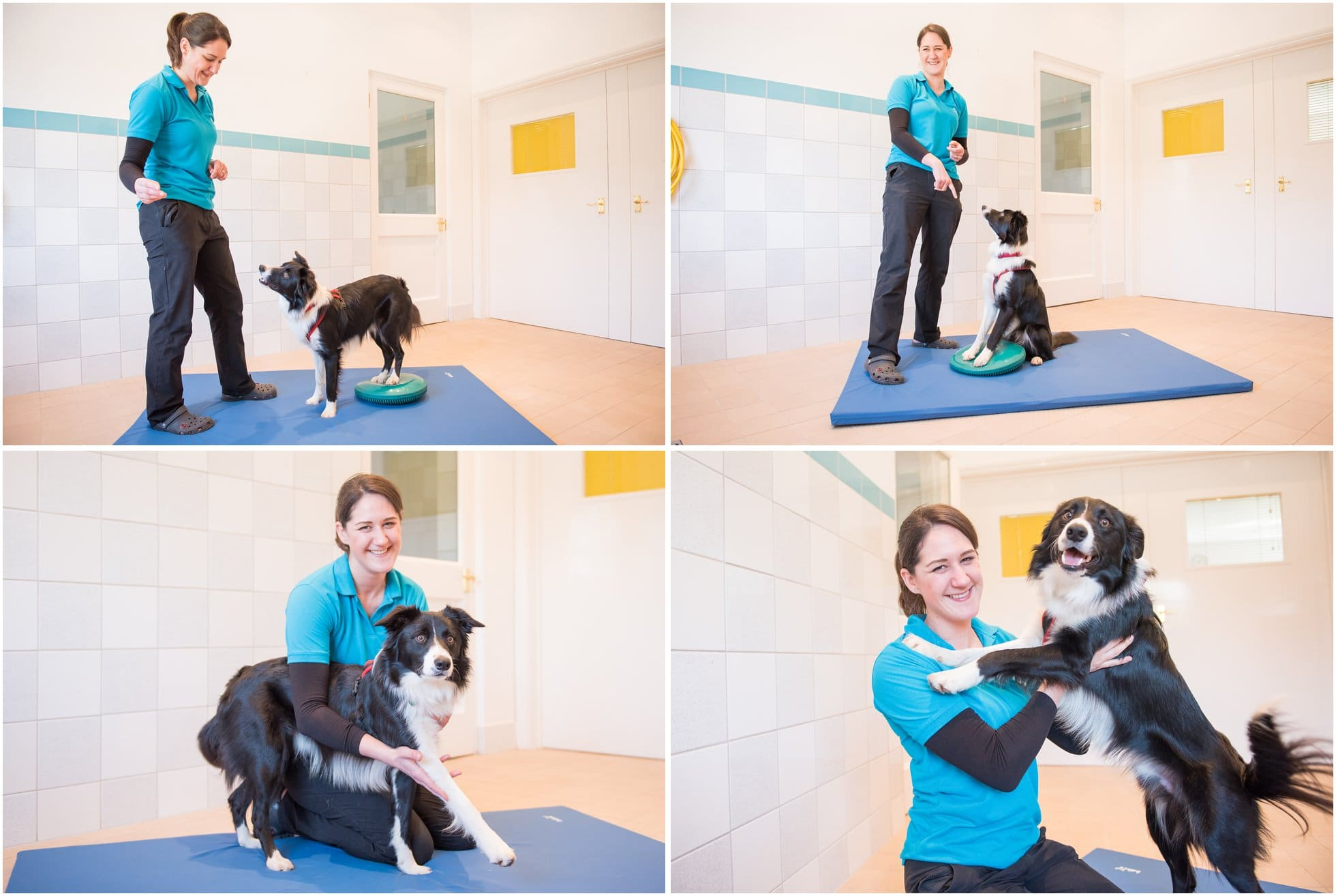 Border Collie therapy