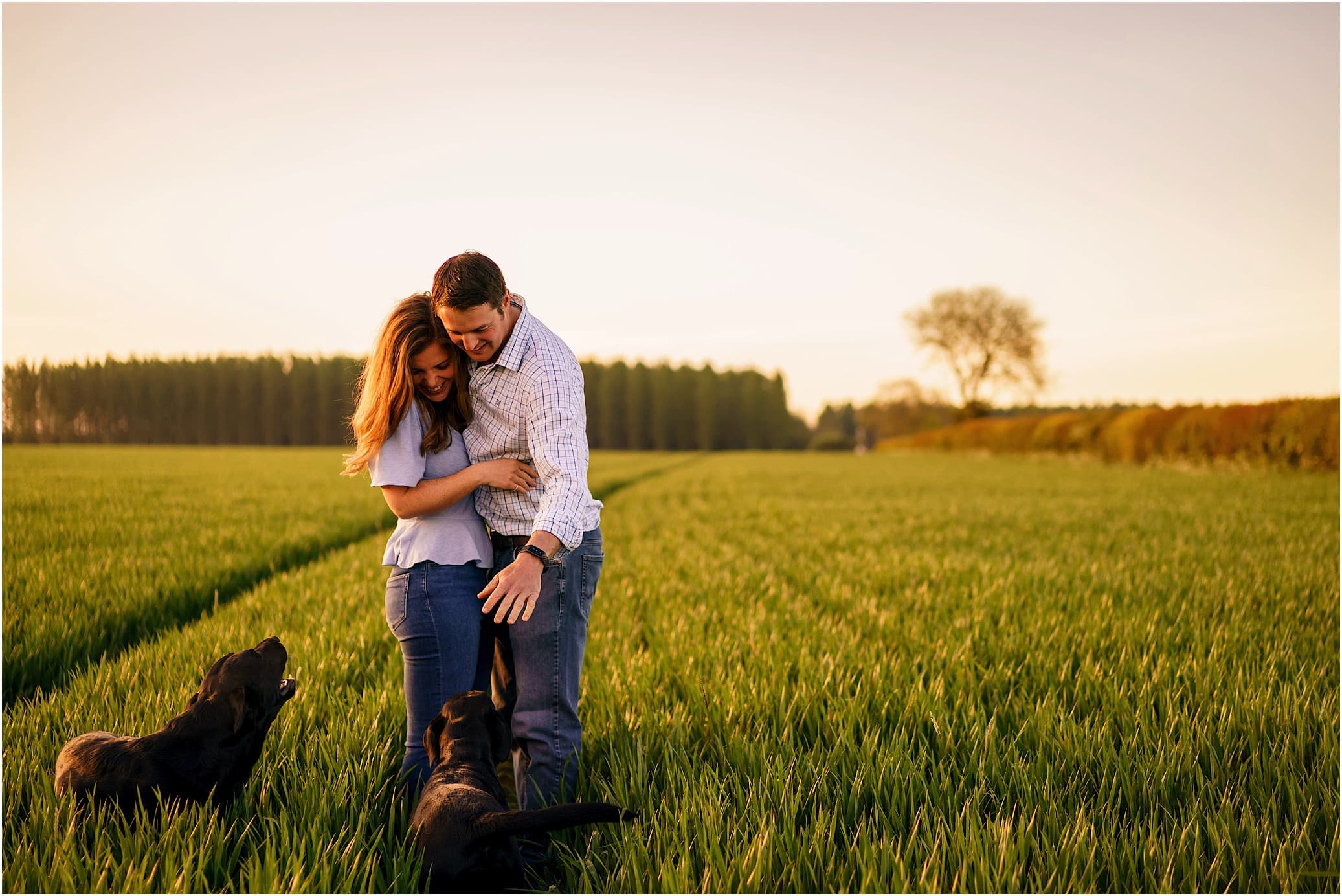 Wheat field golden hour portraits with dogs