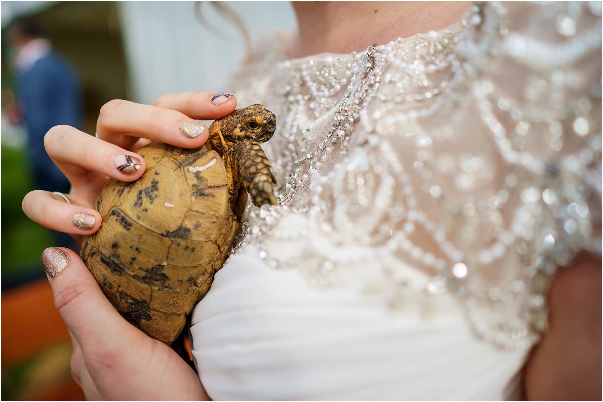 Tortoise and bride