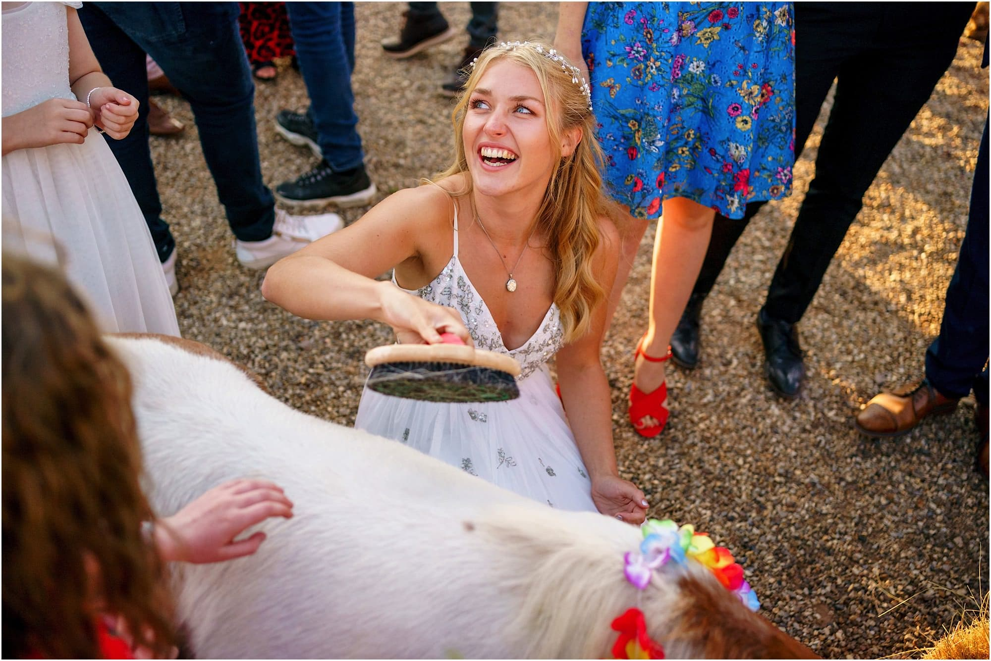 bride brushing the donkey